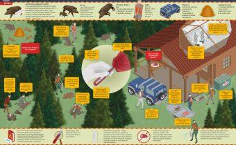 Biologické zásady manipulácie s diviakmi